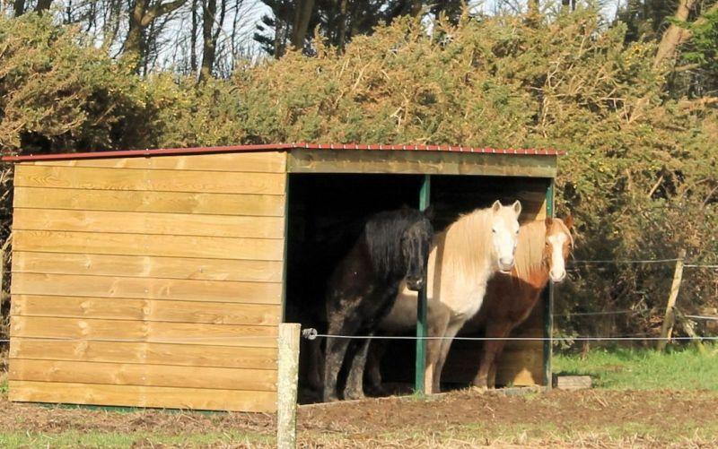Taille abri pour 3 poneys - 1 - Forum Cheval